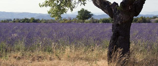 La Provence où tout commence