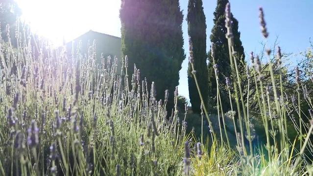 Под солнцем Прованса