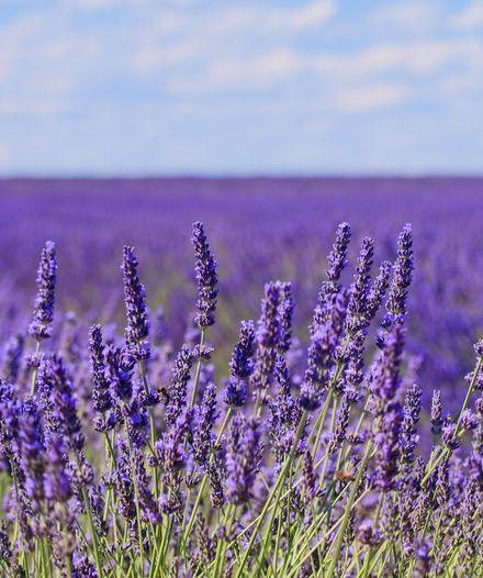 Sous le soleil de Provence